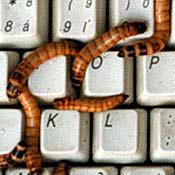 20071219_computer_worm_18